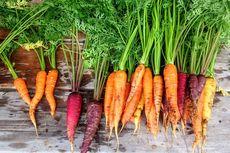 12 Makanan untuk Mencegah Kanker