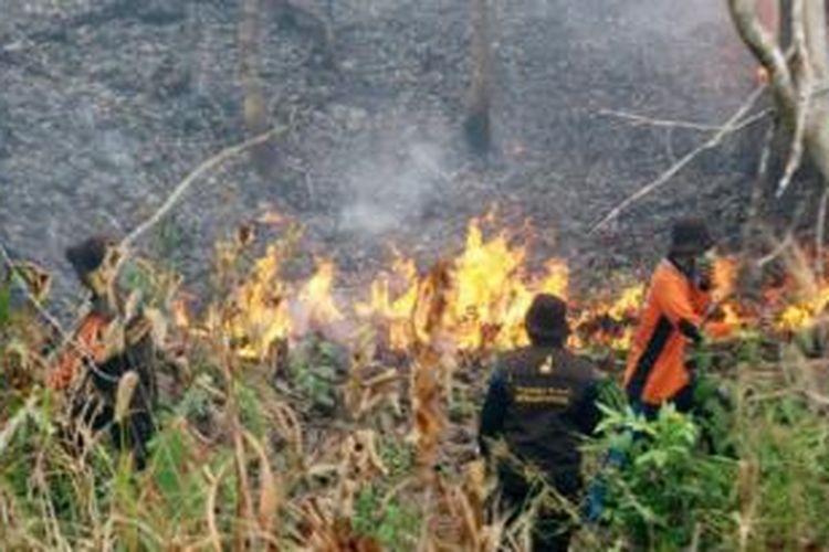 Api masih membakar lahan Pusat Reintroduksi Orangutan Samboja Lestari milik Yayasan Borneo Orangutan Survival, Kabupaten Kutai Kartanegara, Kalimantan Timur, Jumat (25/9) sore. Api membakar lahan sejak Rabu (23/9), dan menghanguskan sekitar 200 hektar. Sebanyak 209 orangutan dan 46 beruang madu yang ditempatkan di Samboja Lestari masih aman.