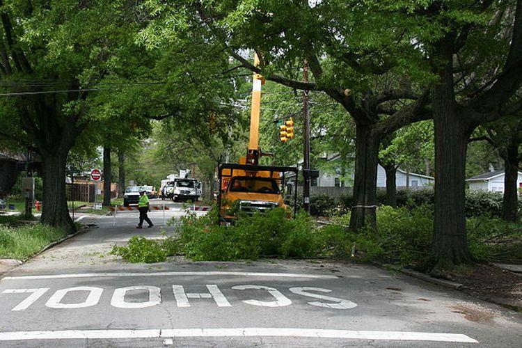 Ilustrasi pohon di perkotaan