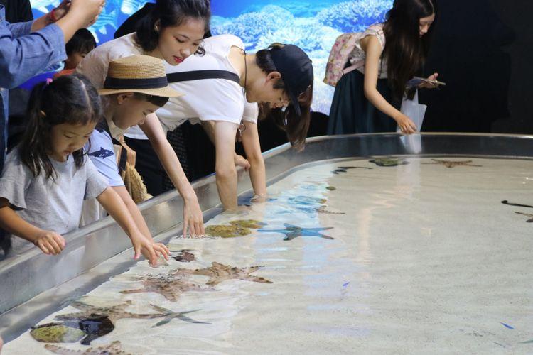Okinawa Churaumi Aquarium adalah salah satu destinasi wisata andalan di Pulau Okinawa. Tampak dalam foto adalah zona laut dangkal di mana pengunjung bisa memegang kerang ataupun bintang laut.