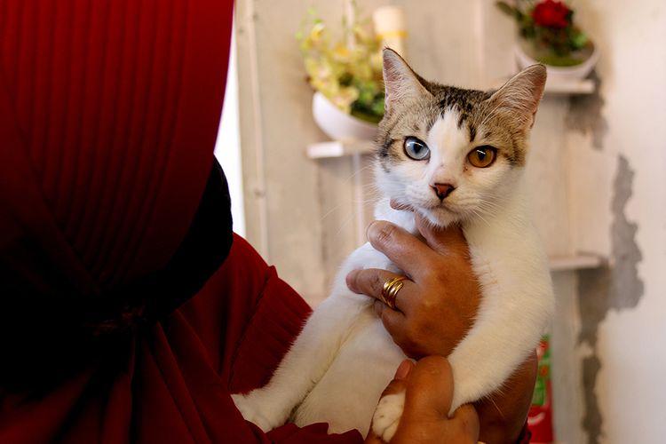 Natalia Christanto, seorang dokter di Kota Banda Aceh bersama kucing peliharaannya di rumahnya di Desa Lamdingin, Kecamatan Syiah Kuala Banda Aceh, Kamis (24/12/2020). Natalia saat ini memelihara 60 ekor kucing dari berbagai jenis dan ras di rumahnya, yang sebagiannya merupakan kucing kampung telantar yang diselamatkan dari jalanan.