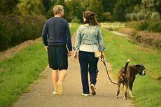 10 Cara Rayakan Hari Valentine dengan Anjing Peliharaan