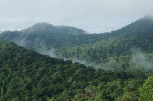 China, Brasil, Peru Akan Bangun Jalur Kereta Api di Amazon