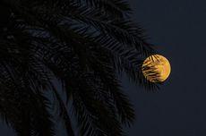 3 Fenomena Langit Malam Ini, Salah Satunya Gerhana Bulan Penumbra