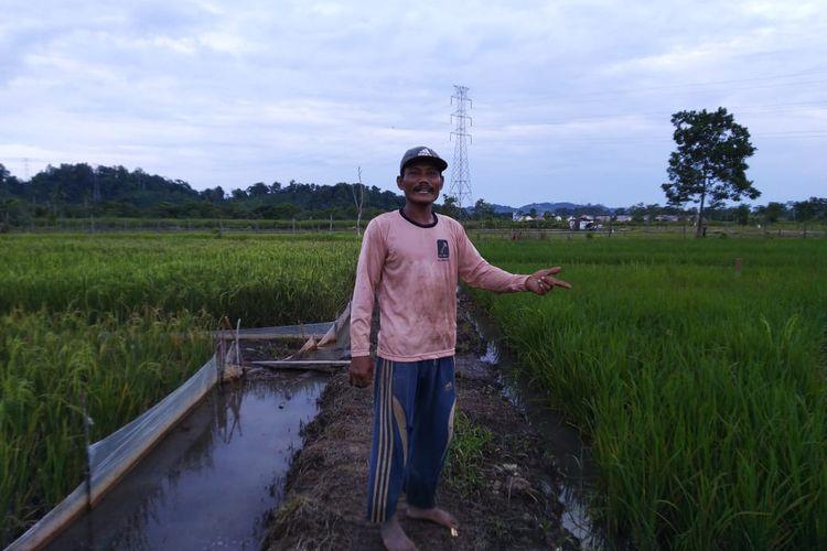 Ketua Kelompok Tani Tempur Rejo, Miswanto saat menunjuk areal sawah yang gagal panen akibat hama di Kelurahan Handil Bakti, Samarinda, Kaltim, Selasa (9/6/2020).