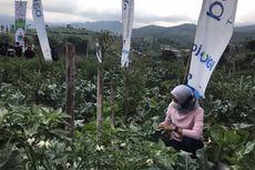 31 Persen Maba Tertarik Entrepreneur, IPB Sediakan Lahan Bertani