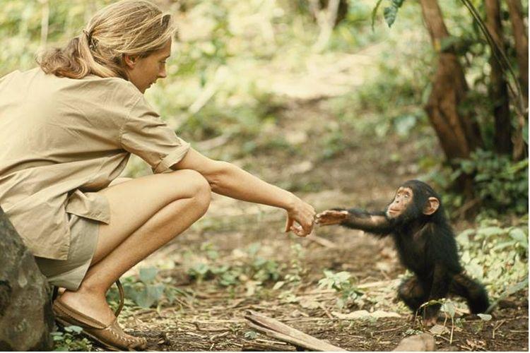 Jone Goodall dan simpanse