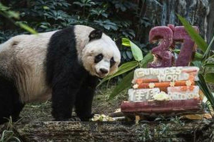 Jia-Jia, Panda di Hongkong Ocean Park.
