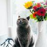 Beragam Penyebab Kucing Menghilang dari Rumah