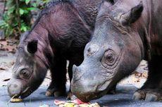 WWF: Keanekaragaman Hayati Hilang Besar-besaran karena Ulah Manusia