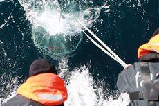 Hampir 200 Ribu Virus Baru Bersembunyi di Laut, Ini Maknanya bagi Kita