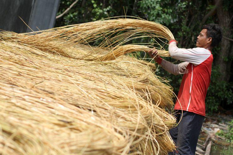 Pekerja menjemur rotan di tempat penampungan sebelum didistribusikan ke pengrajin atau di ekspor di Gampong/Kampung Doy, Kecamatan Ulee Kareng, Banda Aceh, Aceh, Kamis (11/2/2016). Indonesia menjadi negara pengekspor rotan terbesar di dunia yang menyuplai 80 persen kebutuhan rotan dunia yang merupakan hasil produksi hutan tropis di Sumatera, Kalimantan serta Sulawesi.