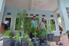 Info Terbaru, BNN Menduga Ada Ladang Ganja Tersembunyi di Tasikmalaya