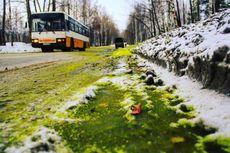 Setelah Salju Hitam, Kini Kota di Rusia Tertutup Salju Hijau
