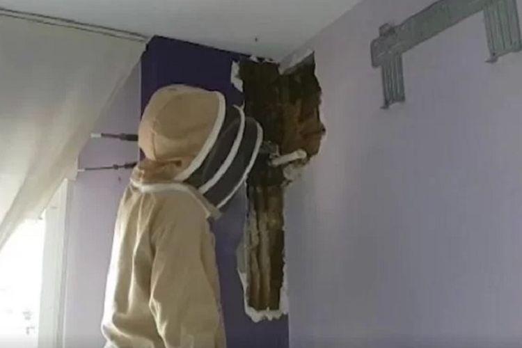 Pawang lebah Sergio Guerrero ketika menangani koloni lebah yang muncul di dinding kamar tidur pasangan di Spanyol.
