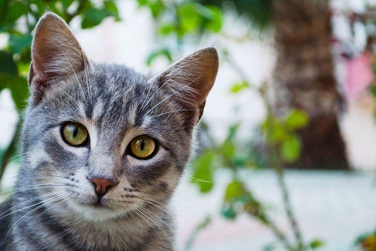 Seekor Kucing Bawa Pulang Sekantung Penuh Heroin dan Kokain