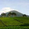 10 Pendaki Gunung Dempo Kena Blacklist karena Ambil Kayu Panjang Umur