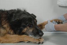 Tips Pertolongan Pertama untuk Anjing dalam Kondisi Darurat