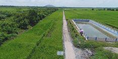 Surplus Beras, Kebutuhan Pangan Kabupaten Penajam Paser Utara Aman