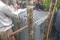 Teror Harimau di Pagaralam Kembali Makan Korban, Ini Penjelasan BKSDA