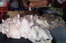 Bakteri Kebal Antibiotik Ditemukan pada Daging Ayam, Ini Respons Peternak