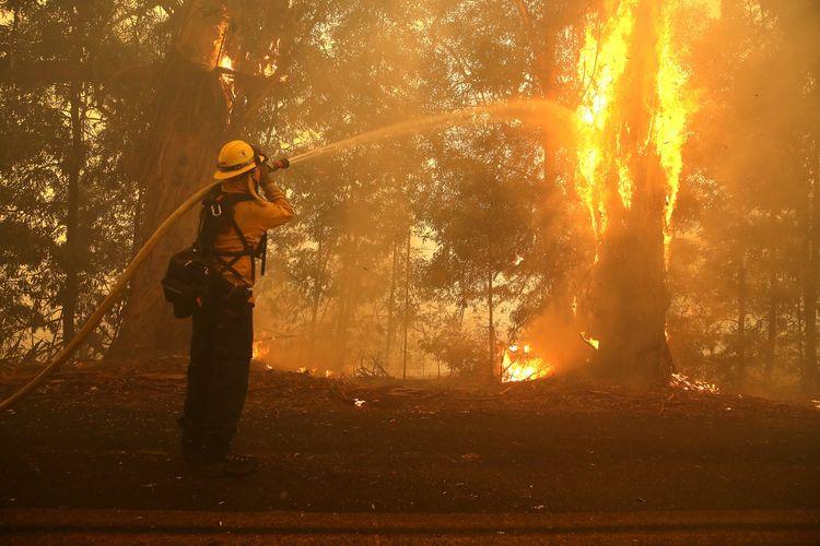 Seorang petugas pemadam kebakaran menembakkan air ke pohon yang terbakar ketika dia berjuang memadamkan Api Kincade yang menyebabkan kebakaran hutan di California pada 27 Oktober 2019. Disokong oleh angin kencang, kebakaran tersebut menghanguskan 12.000 hektar dan 180.000 pengungsi harus mengungsi.