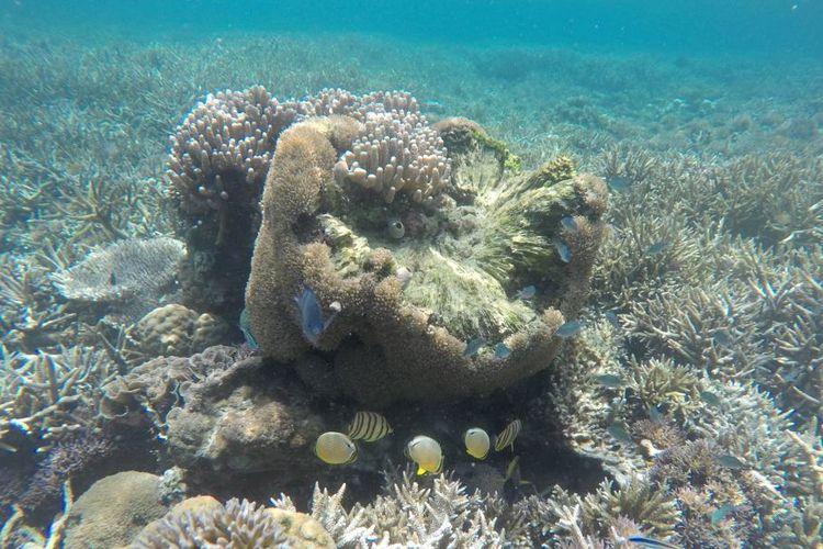 Pemandangan karang dan ikan laut di perairan sekitar Pulau Manjerite, TN Komodo, NTT saat snorkeling, Rabu (14/11/2018).
