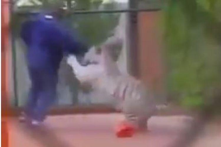 Rekaman video zaman dahulu yang menunjukkan Mike Tyson bermain bersama harimau putih peliharaannya.