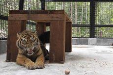 Perantara Jual Beli Satwa Langka Bisa Ambil Harimau Mati di Ragunan