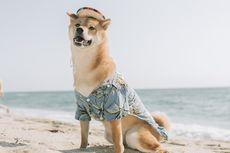 Kenali Tanda Kulit Anjing Terbakar Sinar Matahari dan Risikonya