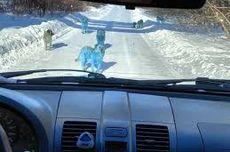 Anjing-anjing Berbulu Biru Muncul di Dekat Pabrik Kimia, Netizen Rusia Geger