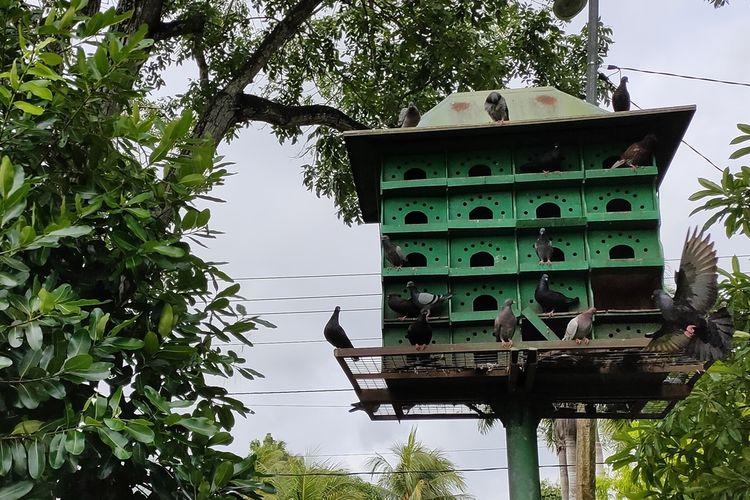 Warga menikmati suasana alun-alun yang asri dan keberadaan burung merpati di Wates, Kulon Progo, Daerah Istimewa Yogyakarta.