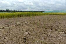 Usai Gagal Tanam dan Panen, Petani di Belu Diminta Kementan Gunakan Asuransi