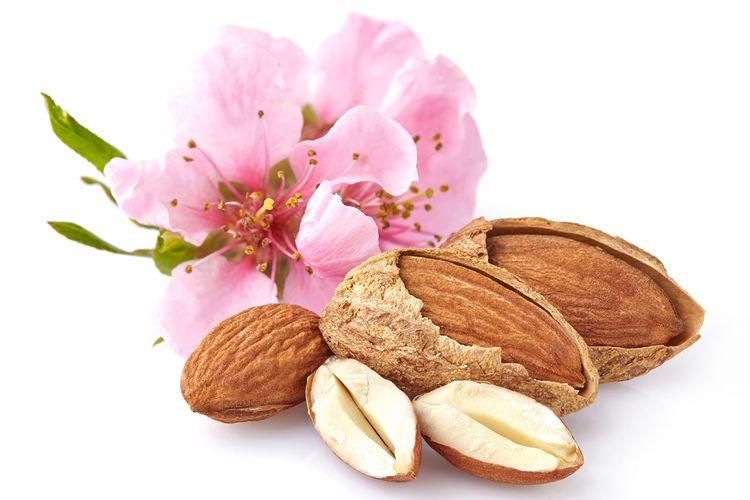 Ilustrasi almond
