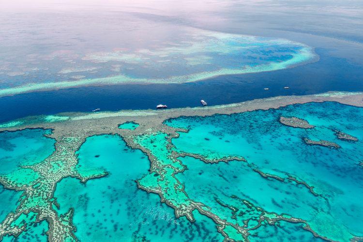 Terumbu karang terbesar di dunia, The Great Barrier Reef