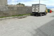 Viral, Video Buaya Sepanjang 2,9 Meter Masuk Parkiran Mall di Palu