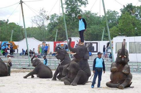 Berbagai Alasan Sirkus Hewan Masih Ditemukan, Salah Satunya Regulasi Lemah