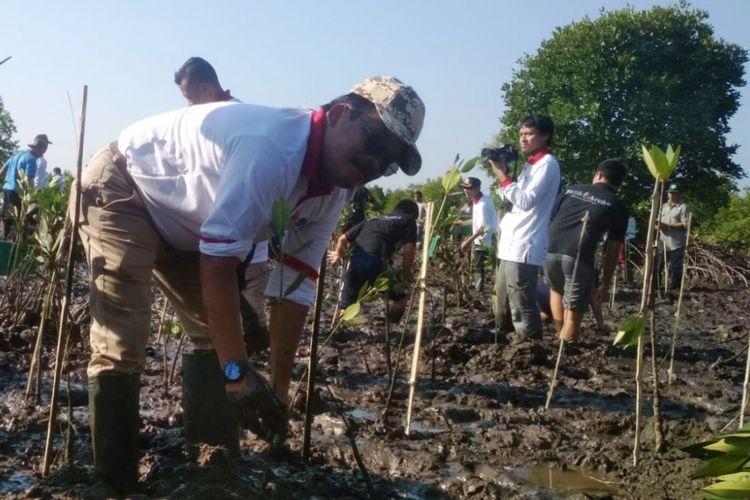 Kota Langsa Kembangkan Ekowisata Hutan Mangrove