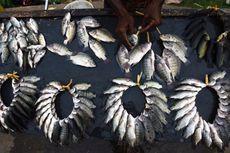 Sepertiga Populasi Ikan Air Tawar Dunia Terancam Punah, Ini Sebabnya