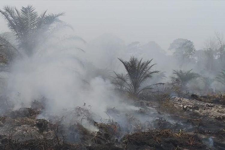 Kebakaran hutan dan lahan kembali terjadi di Riau menghanguskan lahan gambut yang kering