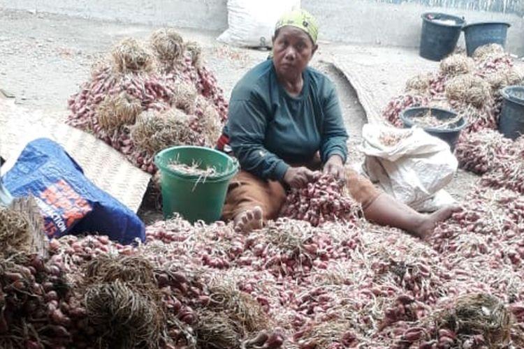 Petani bawang merah di Desa Sidapurna, Kecamatan Dukuhturi, Kabupaten Tegal, tengah membersihkan bawang merah dari tanah usai dipanen, Selasa (27/8/2019)