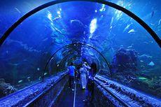 Yuk, Nikmati Liburan Bersama Biota Laut Unik di Seaworld Ancol