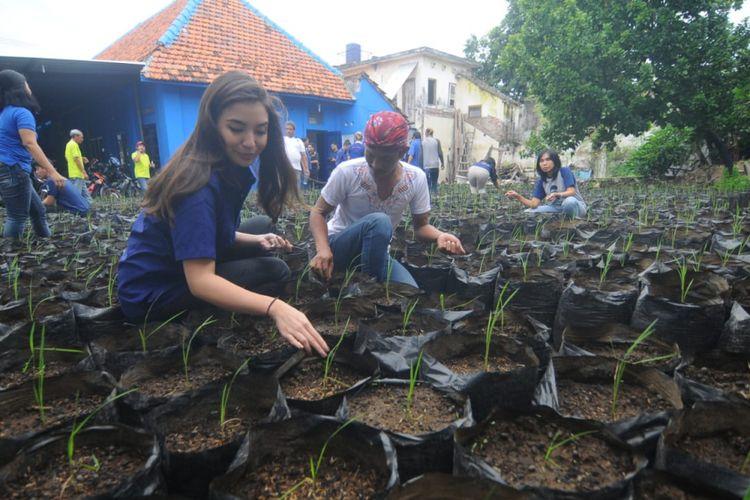 Manohara Odelia Pinot demo menanam padi di Surabaya, Minggu (27/1/2019)
