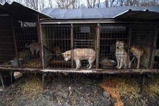 Cuaca Panas di Korea Utara, Masakan Daging Anjing Paling Banyak Dicari