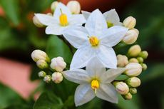 4 Bunga yang Bisa Bikin Bahagia dan Bantu Proses Penyembuhan