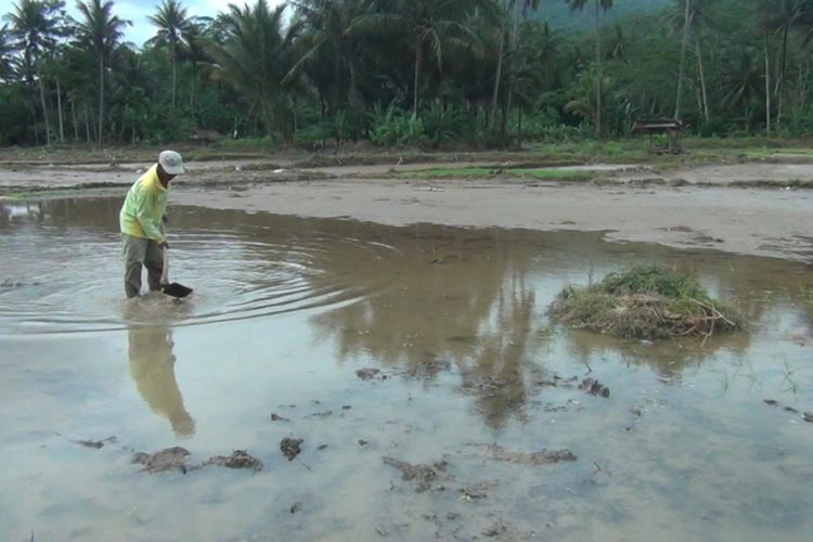 Seorang petani dusun Karajan desa Kebonagung kecamatan Kebonagung,membersihkan lumpur serta sampah yang menimbun area persawahan akbibat banjir yang menerjang kabupaten Pacitan beberapa hari lalu