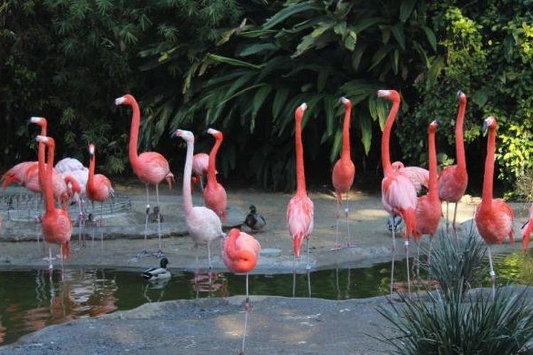 San Diego Zoo Flamingo Garden