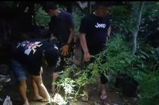 Ditemukan 30 Pohon Ganja di Tasikmalaya, Pemiliknya Sudah 2 Kali Panen