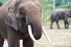 Seekor Gajah Ditemukan Mati di Areal Perusahaan di Riau