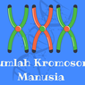 Jumlah Kromosom Manusia dan Fungsinya